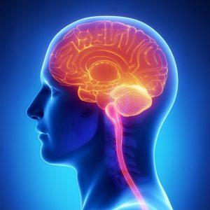 מוח, שבץ מוחי